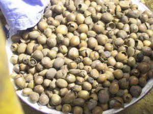 Raw shea nuts are harvested off the ground, put into water and de-husked. The fleshy pulp is eaten, and the nuts are boiled for 30 minutes, then sundried 4-5 days. This is what they look like at this point.