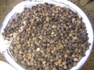 Here are the dried kernels or almonds. Ghana has a tradition of baking the dried almonds. We saw less knowledge of baking the almonds in Guinea. This extra step kills the natural enzymes in the nut which break down the oils and shorten shelf life. The baked nuts will have a higher oil yield as well.